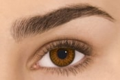 Freshlook® Colorblends Brown 1 Mois - Lentilles Marron